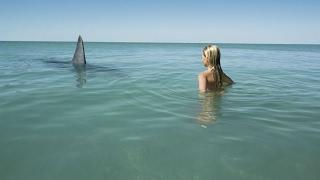 Insane Great White Shark Encounters!