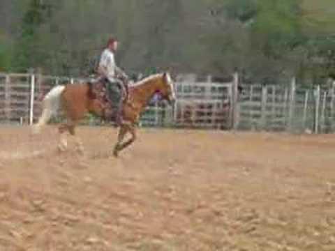 Palomino Horse Loping