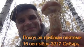 Поход в лес за грибами опятами березовая чага мухомор 16 сентября 2017 выживание в дождь Сибирь тайг
