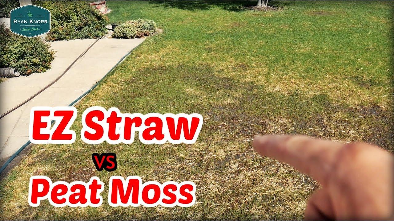 Front Lawn Renovation Update Ez Straw Vs Peat Moss Youtube