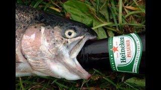 Десятилетний вискарь и пиво под копченую рыбку.