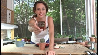 Video Demo: Starting cacti from seeds with Sucs for You!