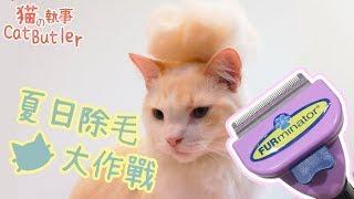 [貓の執事 CatButler]猫執事的除毛大作戰!誰的毛最多?