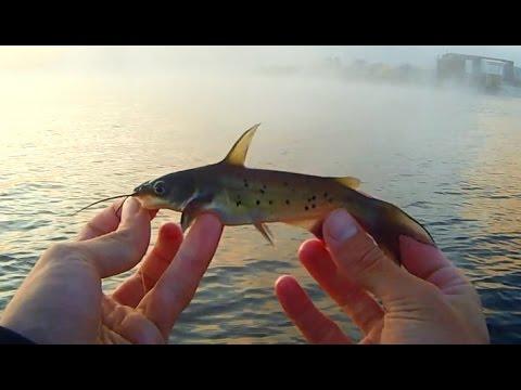 рефтинское водохранилище где лучше ловить