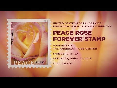 USPS Peace Rose Forever® Stamp - YouTube