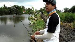 Repeat youtube video เทสปลาช่อน มีนบุรี 1