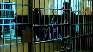 Operace zlatý Fénix CZ celý film, český dabing, Loren Avedon