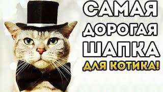 САМАЯ ДОРОГАЯ ШАПКА КОТИКА! - Cat Goes Fishing