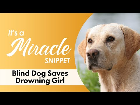 Blind Dog Saves Drowning Girl - It's A Miracle