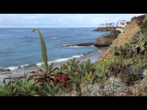Video Clip - Orange County Beaches Palm Trees Sun Sand Surf Foilage Fauna