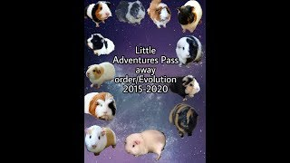 Little Adventures Pass away order/Evolution 2015-2020 OUTDATED.