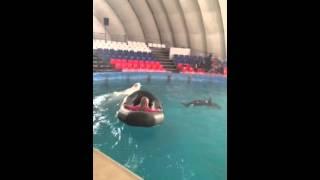 Шоу дельфинов и белуги