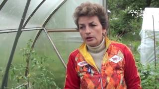 видео Как защитить томаты от фитофтороза. Сайт