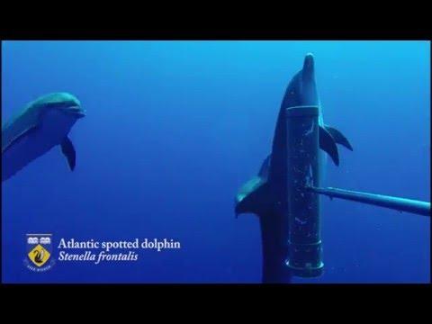 Ilhas Selvagens (Savage Islands) - 2015 pelagic baited camera surveys