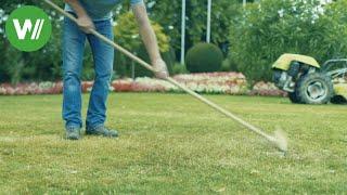 So wird mein Rasen schön! Rasenpflege, Mähen, Vertikutieren, Sähen