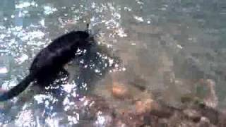 Ashley Starling Of Canine Tutors Dog Training Gets His Dog To Fetch Underwater!