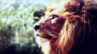 Reggae Instrumental - Amor de Jah - Love Riddim beat