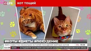 Новосибирский кот Масик похудел, чтобы найти хозяина
