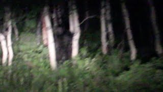 Bigfoot Sighting near Sundance Utah
