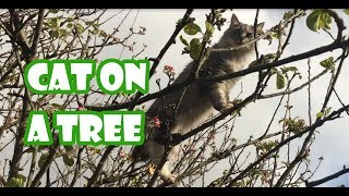 Cat climbs a tree