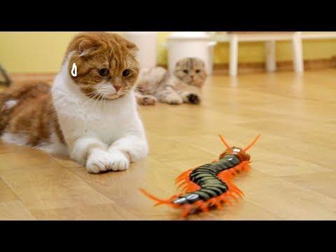 대왕 지네를 본 고양이의 반응 Cats' Reaction to a Giant Centipede [SURI&NOEL CAT's STORY]
