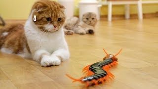 대왕 지네를 본 고양이의 반응 Cats' Reaction to a Giant Centipede [SURI&NOEL CAT's STORY]