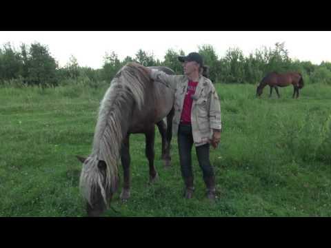 Вопрос: Вороная лошадь это какого цвета Конь вороной масти какой это цвет?