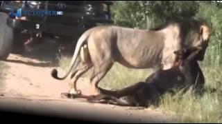 Ужасные нападения животных на людей