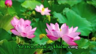 YOUTUBE NHAC SI HO DANG TIN _ Đóa Hoa Dâng Mẹ _ Hồ Đăng Tín