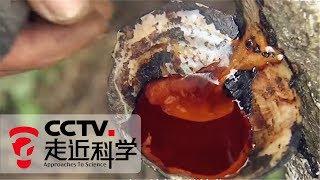 《走近科学》物从何处来 · 漆:惊艳世界的美 认识八千年的中国漆艺 20181008 | CCTV走近科学官方频道
