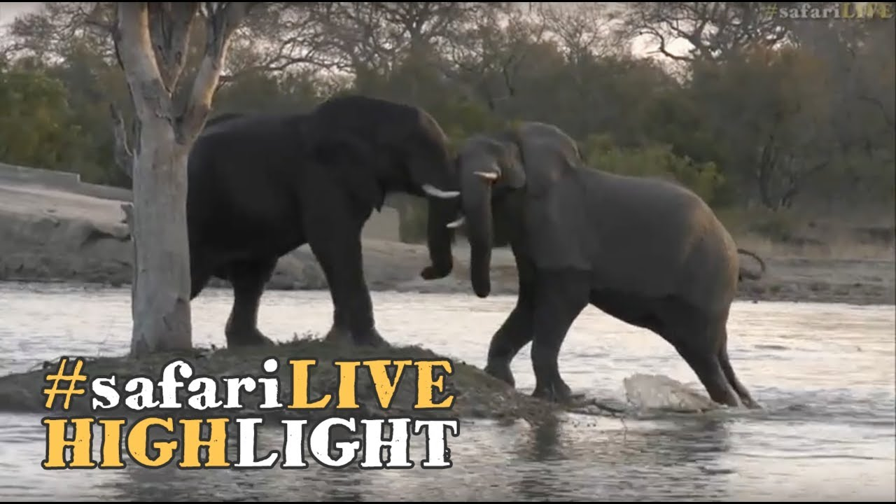 playful-elephant-bulls-splashing-around-at-chitwa-dam