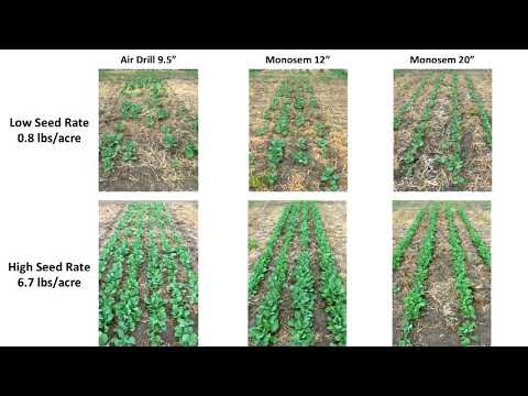 A Precision Decision: is Precision Planting the Future of Canola? - Farming Smarter Conference 2017