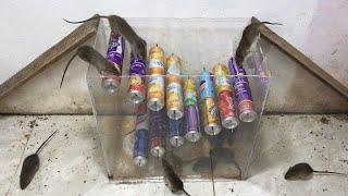 Meilleurs pièges à souris 2020 20 souris piégées / piégées dans des canettes de coca