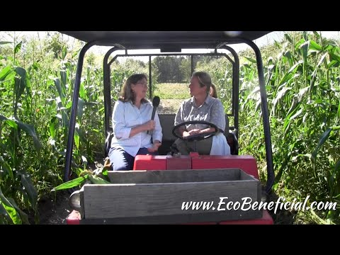 EcoBeneficial Tips: River Berry Organic Farm Non-GMO Corn & Pollinators