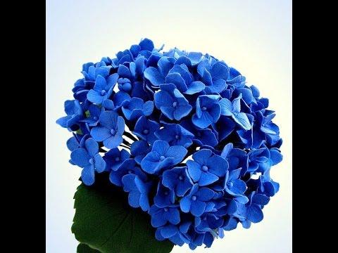 Hướng dẫn làm hoa Cẩm Tú Cầu bằng giấy nhún