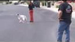Dog Training - Amazing Transformation - Training A Fearful Dog