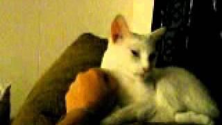 Pinky kitty cat sleeping! She is deaf but so sweet!!!