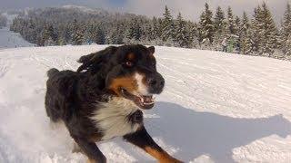 GoPro: Powder Hound