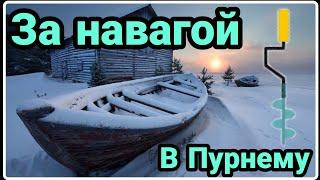 Рыбалка на Белом море Пурнема Навага