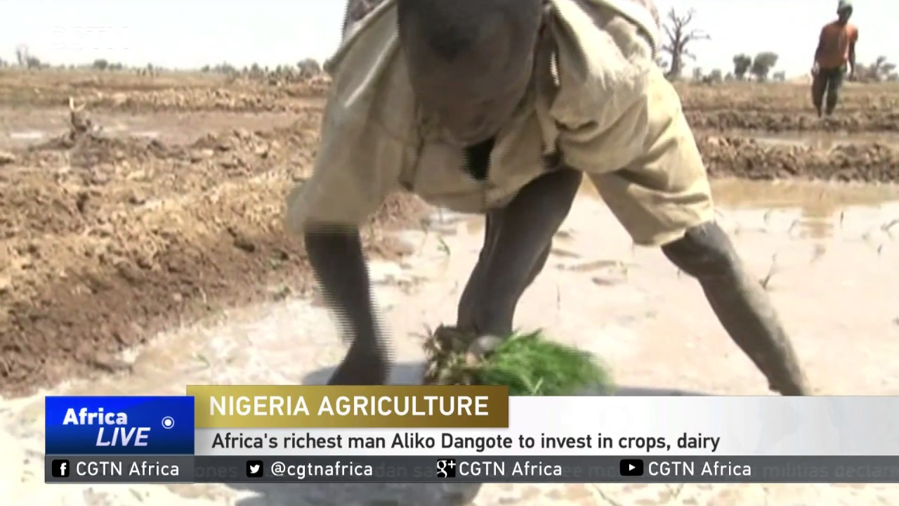 Africa's richest man Aliko Dangote to invest in crops, dairy