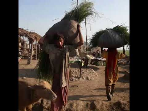 A Livestock Farmer's Daily Task