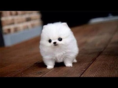 Cute Small Dogs The Top Smallest Dog Breeds In The World Cute Dogs