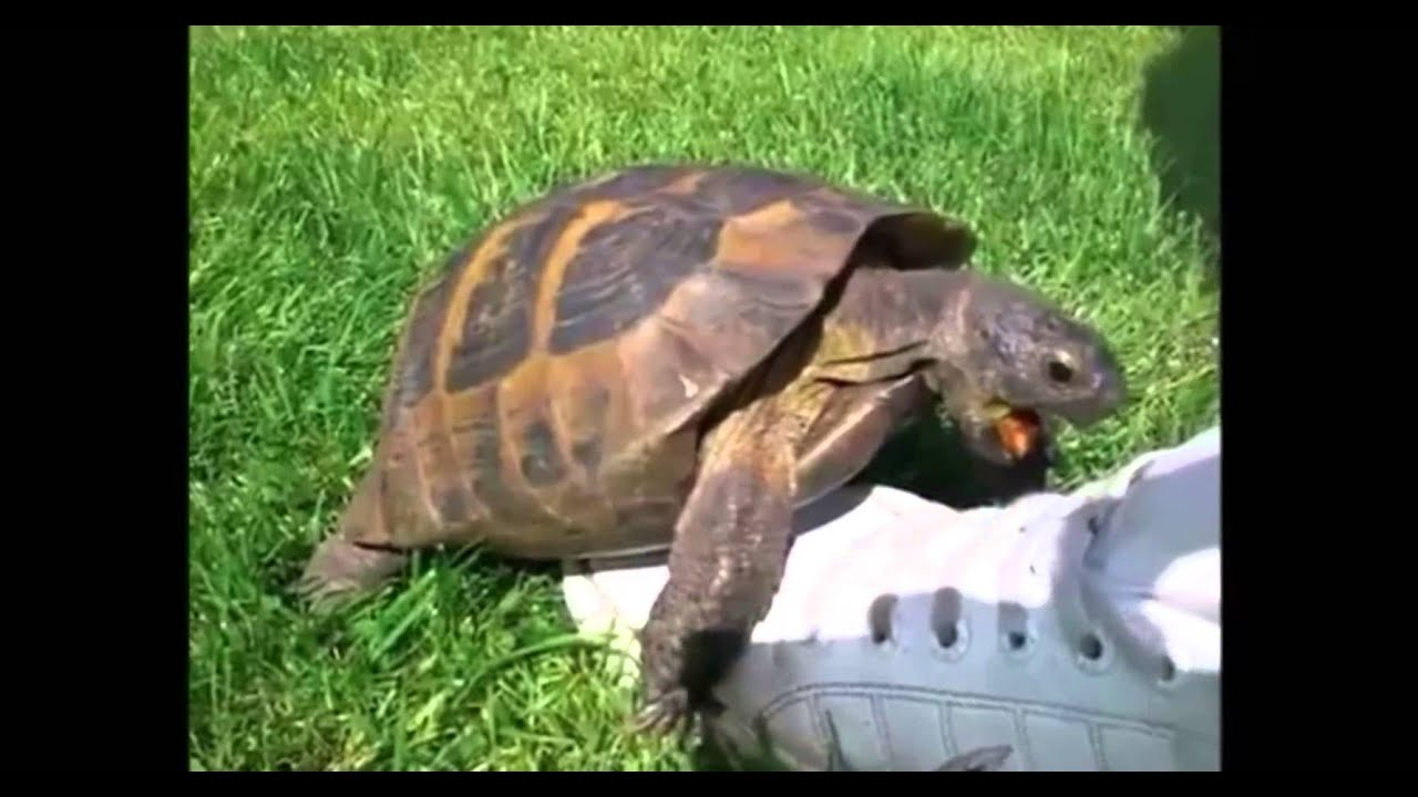 Turtle Having Sex With Shoe Remix
