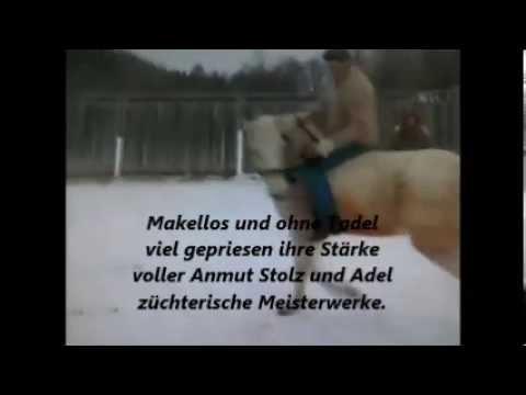 pferdesprüche 2 - youtube