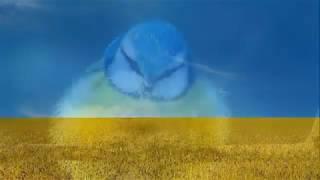 Песня Перлина Украина