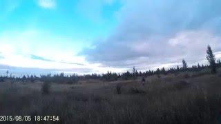 Открытие охоты с курцхааром на боровую дичь. Охота на тетерева с легавой собакой, видео.