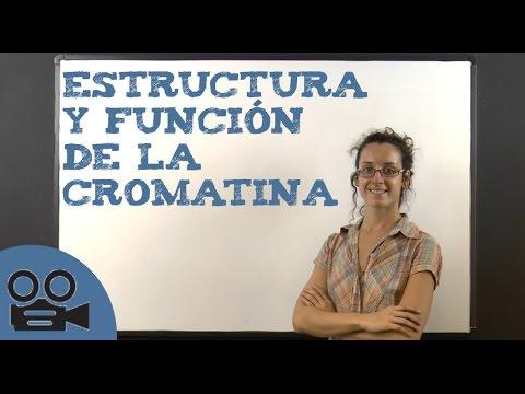Estructura y función de la cromatina