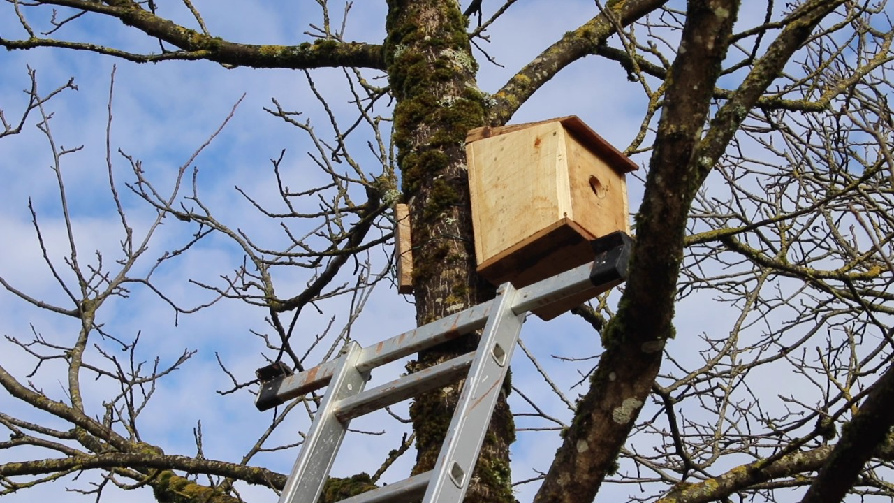 Comment faire venir des oiseaux dans son jardin youtube - Comment attirer des oiseaux dans son jardin ...