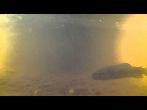Underwater in Mt Field National Park Tasmania