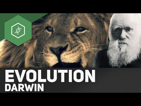 Evolutionstheorie von Charles Darwin